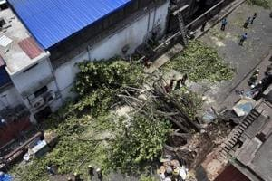 Fire department personnel work to clear the street, blocked by a tree which got uprooted in the recent massive storm, behind the Police Headquarters at Lalbazar in Kolkata.