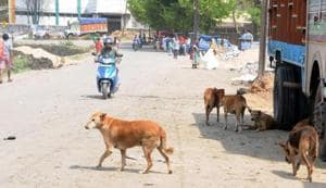 Packs of dogs are responsible for the attacks, which led to the death of six children and injuries to dozens of others in Sitapur.