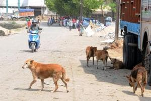 According to an estimate, there are more than 2,500 street dogs in Haldwani .