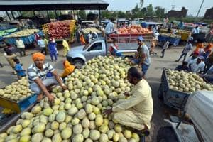 Muskmelons on sale at Roopewal near Malsian in Shahkot on Tuesday.