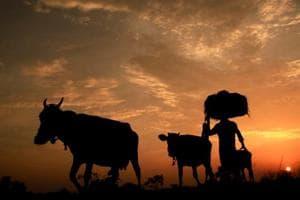 Agartala: A farmer with cattle during sunset, at Joypur village near Agartala, on Friday. (PTI Photo) (PTI5_18_2018_000207A)