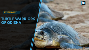 Turtle warriors of Odisha embrace mission to save threatened species