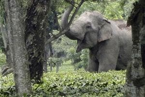 Officials said four employees were patrolling the Hallapara zone of the national park that day when an elephant suddenly appeared in front of them.