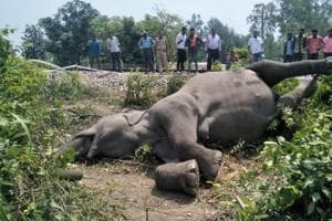 The incident happened near Central Institute of Medicinal and Aromatic Plants close to the Nagla bypass around 2 am, according to forest officials.