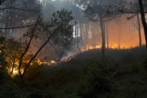 A fire burns in a pine forest. Both Uttarakhand and Himachal Pradesh have seen a spurt in forest fires.