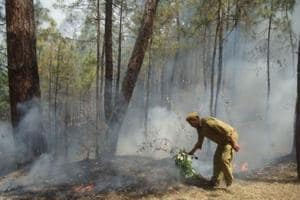 The forest fire season in state began on February 15. In 2016, forest fires had burnt down over 4,500 hectare of vegetation.