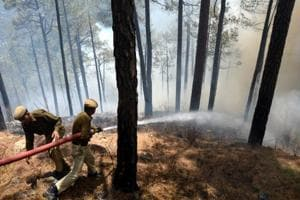 The high court seeks details on number of forest fires reported, kind of damage caused, and what steps the state government was taking to prevent them.
