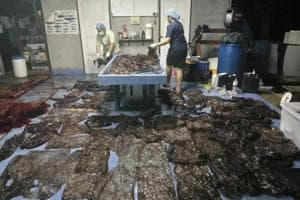 Up to 80 plastic bags extracted from within a whale are seen in Songkhla, Thailand, in this still image from a June 1, 2018 video footage by Thailand