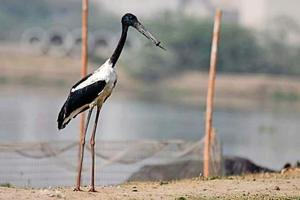 The black-necked stork was last spotted at the Basai wetlands on Friday morning but flew away towards Najafgarh before it could be captured and the bottle neck removed.