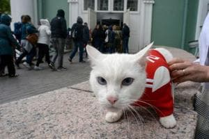 This deaf, white cat named Achilles is soon to begin his work as Russia