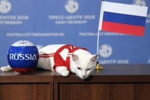 Achilles the cat lies on a table after attempting to predict the result of the opening match of the FIFA World Cup 2018.