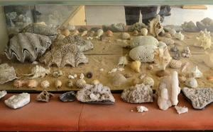 Shells of molluscs, corals, oysters and clams found at the mouth of the Ulhas River on display at the Titwala museum.