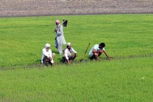 Farmers' outstanding loans towards public and private sector banks had touched  Rs 63,729 crore as on March 31, 2018, according to Punjab State cooperative Bank figures.