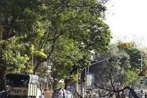 Yash Desai was killed after a branch of the tree fell on him outside Jeevan Sudha Society on Saturday.