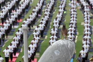 A bird looks on as people practise yoga at SMS Stadium in Jaipur on Thursday.
