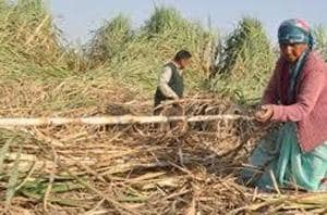 The private mills had stopped paying the farmers soon after the Union government made an announcement of providing Rs 5.5 per quintal relief on sugarcane sold to the mills.