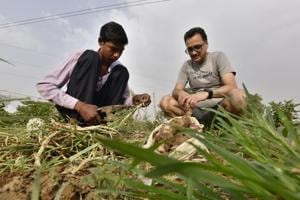 Photos: Gurugram residents turn urban farmers to fight pesticides and chemicals