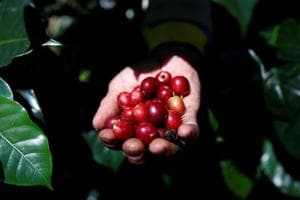 Photos: Indonesia's thirst for coffee restrains export of its premium b...