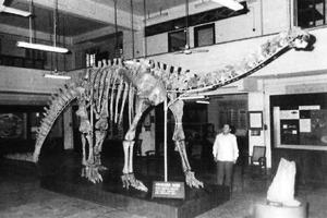 A file photo of the skeleton of the herbivorous dinosaur Barapasaurus tagorei at the Indian Statistical Institute, Kolkata.