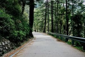 A turn on the jungle trail from Naddi to McLeod Ganj town.