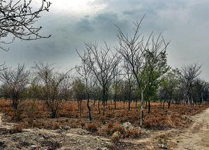 A view of dried out forest area at Garhi Mandu village, near Shahdara on the outskirts of Delhi.
