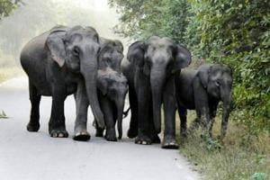 On February 8, 2018, an elephant killed a youth from Dehradun, who had gone inside the jungle in Thano range for a picnic with his friends.