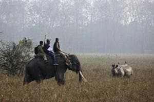 Forest officials count a horned rhinoceros from on top of an elephant during a rhino census at the Pobitora Wildlife Sanctuary in Assam.