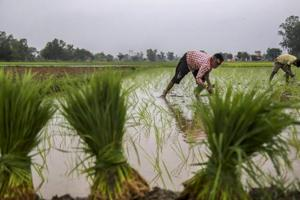 The BJP is aware that the agrarian crisis could affect its prospects in coming elections.