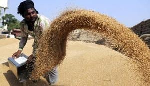 The latest wheat production data shows that wheat production in the state stands at 357.19 lakh MT