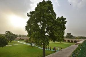 The Ashoka tree at Rajghat.