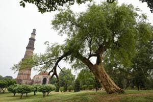 Photos | Delhi's iconic trees: Green residents shielding against pollution