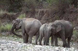 The last incident took place on June 8 when an elephant was killed by a train near Deopara in the same area.