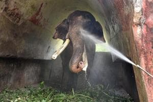 Photos: Delhi Zoo's animal residents await monsoon