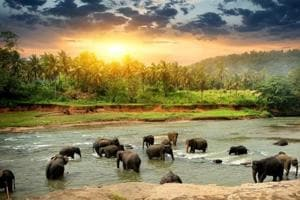 Some of the most popular destinations in Sri Lanka include Kandy, Colombo and Bentota.