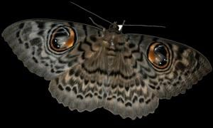 The moth camp aims to encourage people to document moths in their region and share their findings on a common platform