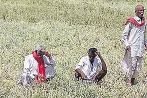 Rajasthan, like many other states, is in the midst of an agrarian crisis caused largely by falling prices for farm output .