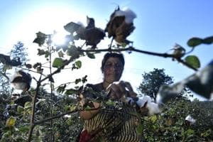 39-year-old cotton farmer and single mother Usha Pande had pinned her hopes on government compensation to survive another farming cycle.