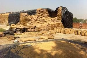 There are 2.5 lakh tonnes of wheat stored in the godown managed by state agency Pungrain, and FCI says the stock is rotting as movement has not taken place for the past two years.