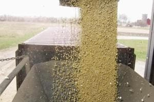 Soybeans pour into a converted consumer goods container at Elburn Coop