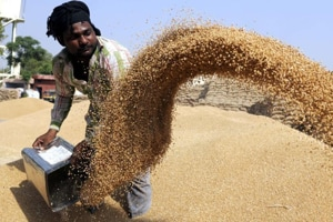 Wheat production in Punjab this year touched 185 lakh tonnes, a high of six years.
