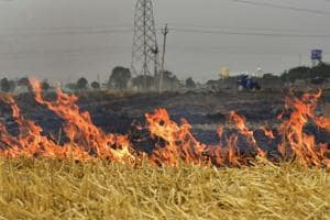 Burning of agriculture waste is one of the reasons for high aerosol levels.