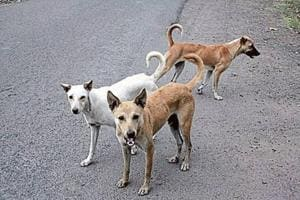 The last survey conducted by the SDMC found the dog population in the area was 1,89,285, but only 64,837 dogs were sterilised.