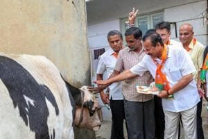 A BJP leader seeks blessings of a cow during an election campaign.