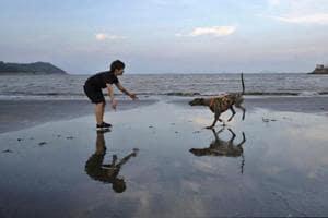 Photos: Dog track closure prompts adoption pleas in Macau
