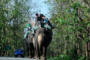 Tourists enjoy elephant safari at Corbett Tiger Reserve in Ramnagar.