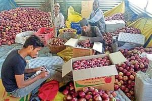 Workers packing apples in boxes in Shimla on Friday.