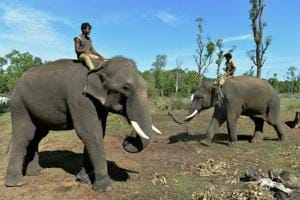 Photos: On the frontline of the human-elephant conflict in Karnataka