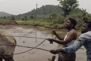 A farmer and a budding actor from Telangana who took up the 'Kiki dance challenge', grooving to Drake's smash hit as they plough a field with bullocks, have become a sensation with a video of the act going viral.