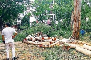 Forest officials found at least 11 eucalyptus trees were cut and 27 trees were pruned.