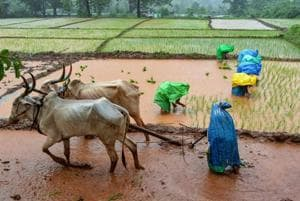 IMD officials misled farmers saying that there would be ample rain during the kharif season, they had said.